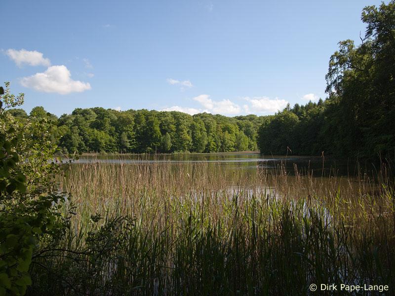 Zweifleck Habitat