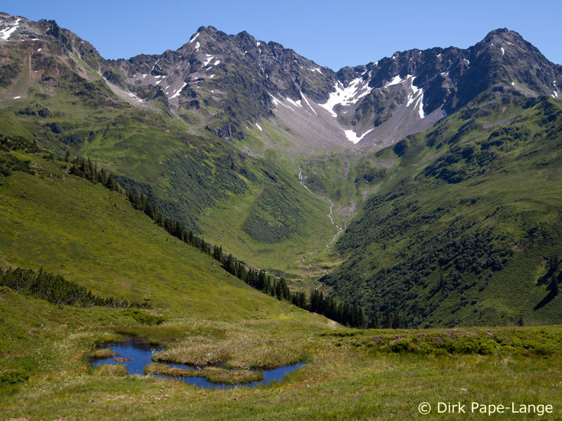 Habitat der Alpen-Mosaikjungfer